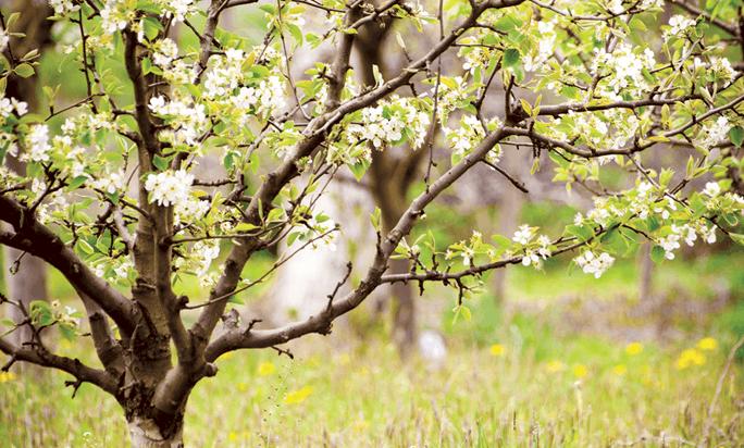 Уход за плодовыми деревьями осенью