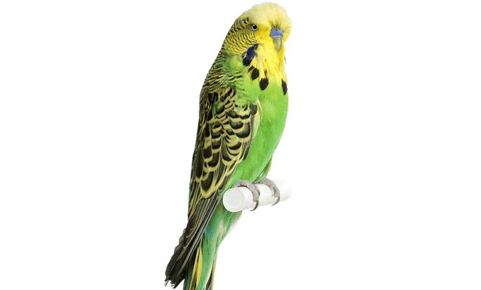 Самая красивая птичка - попугай
