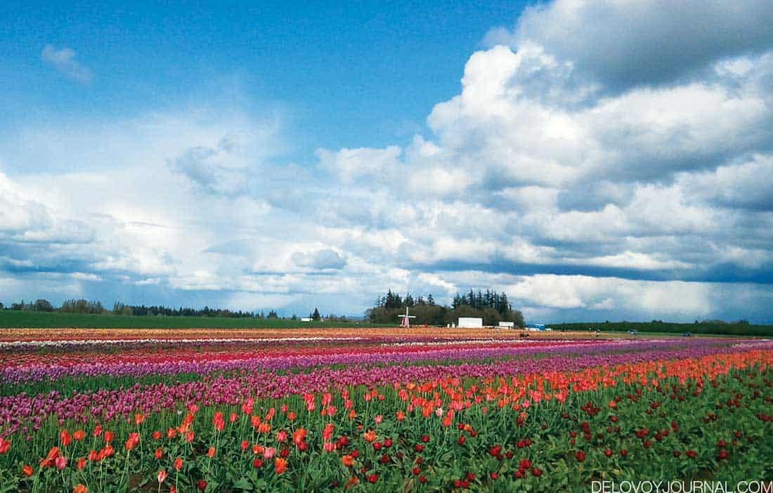 Штат Орегон, США