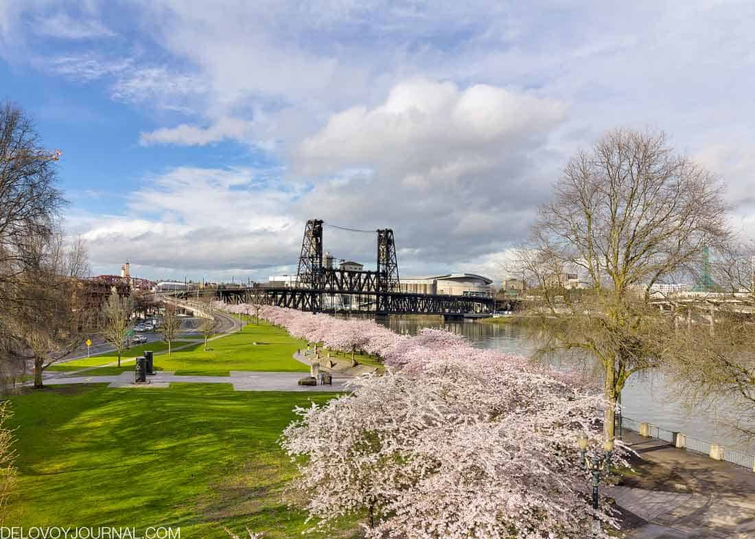 Цветение сакуры в Портленд Орегон