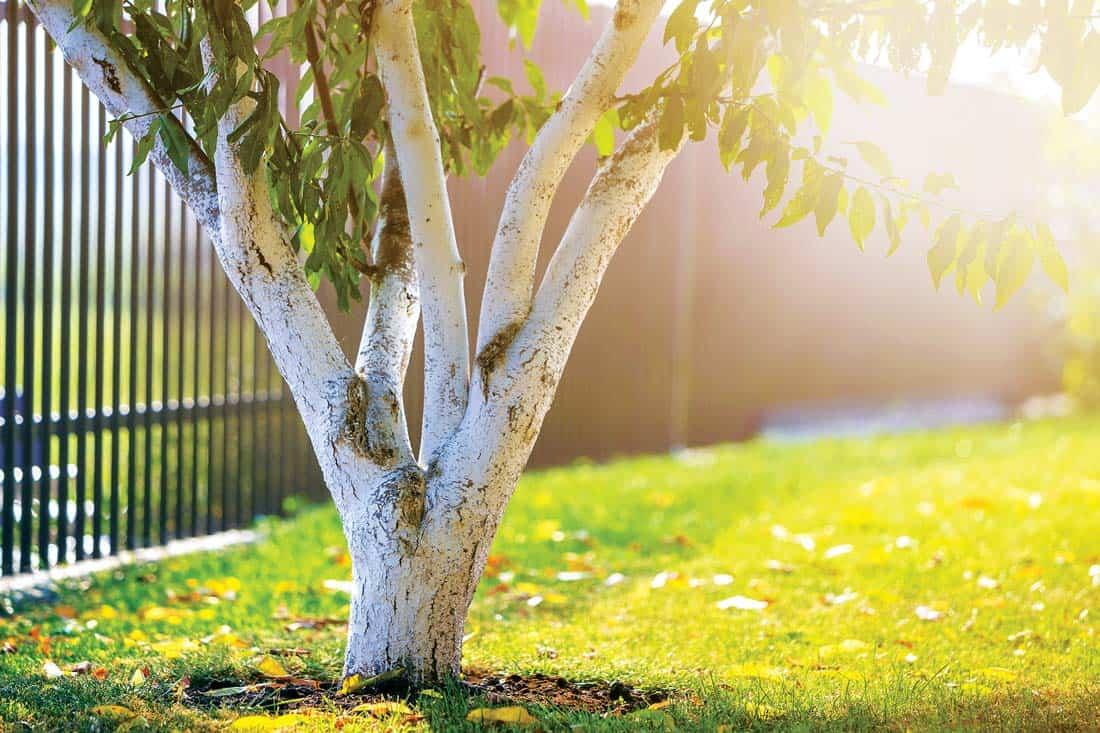 Защита стволов деревьев